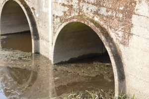 Bakteriehalterna i dammarna tyder på att avloppsvatten tillförs dagvattnet. Foto: Berit Önell