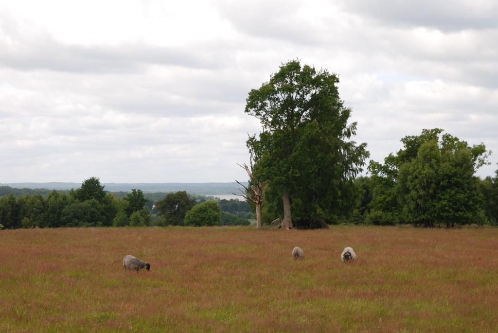 Stora delar av Hovdalaområdet ska återskapas som betesmarker.