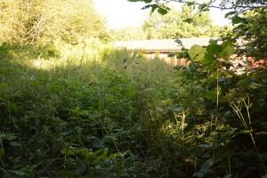 Manshögt ogräs skymmer husen. Här är gymnasiesärskolans nya undervisningsplats för växtodling. Foto: Berit Önell