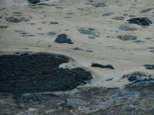 Skum och alger vid Finjasjöbaden, Sjörröd, tisdag 4 augusti 2015.
