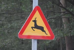 Trafikanter varnas för hjortarna som ibland smiter ur hägnet. Foto: Urban Önell
