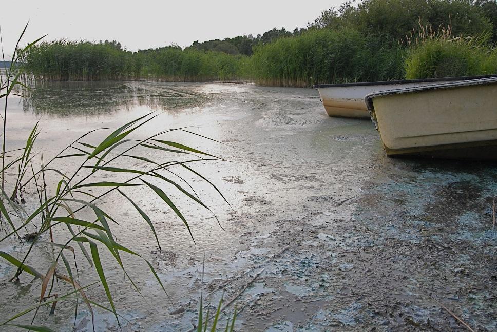 Vattenpesten gör det mycket svårt att ta sig ut med båt i Finjasjön vid Sjörröd. Foto: Urban Önell