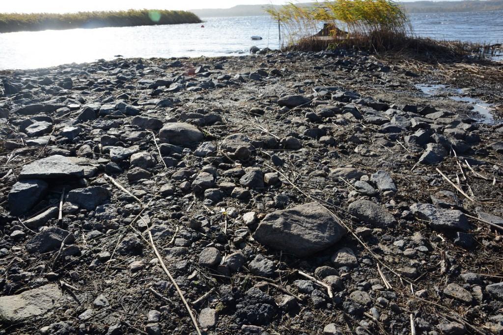 På vissa ställen ligger asfalten nära vattnet och på platser som ofta översvämmas under vårvintern.