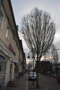 Trädet med fågelnätet står precis utanför Carl Anderssons entré mot Järnvägsgatan och, enligt personalen, var trappan tidigare full av fågelskit.