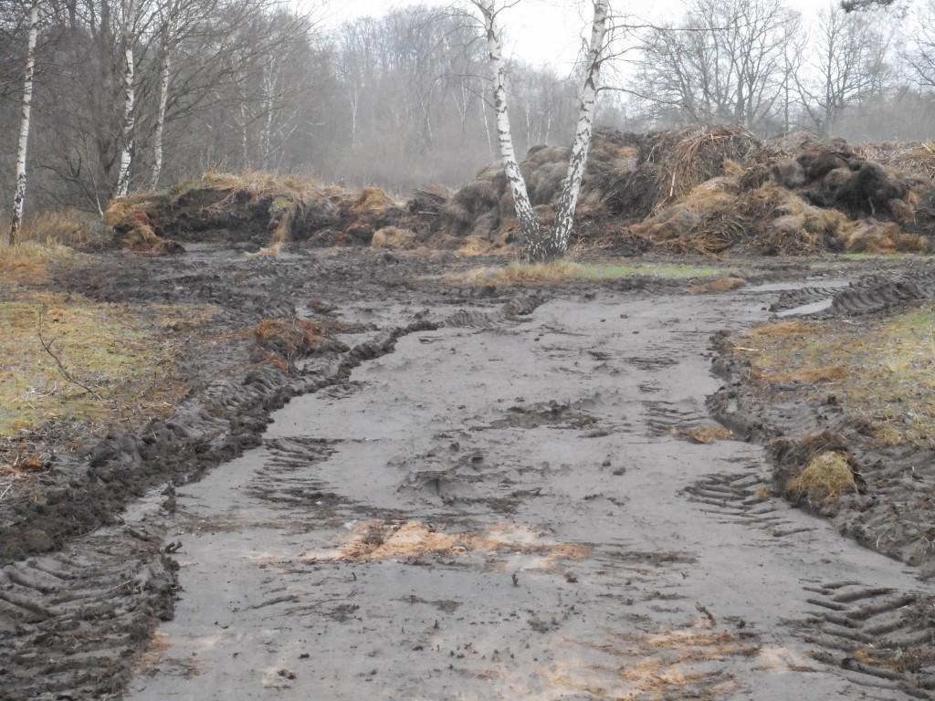 Vasshögen nära Hovdalavägen körs nu till kompost på avfallsanläggningen i Vankiva. Men under vassen ligger något som ser ut som svart slam.
