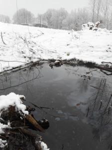 Föroreningarna kom från kanten av bäcken i riktning från reningsverket.