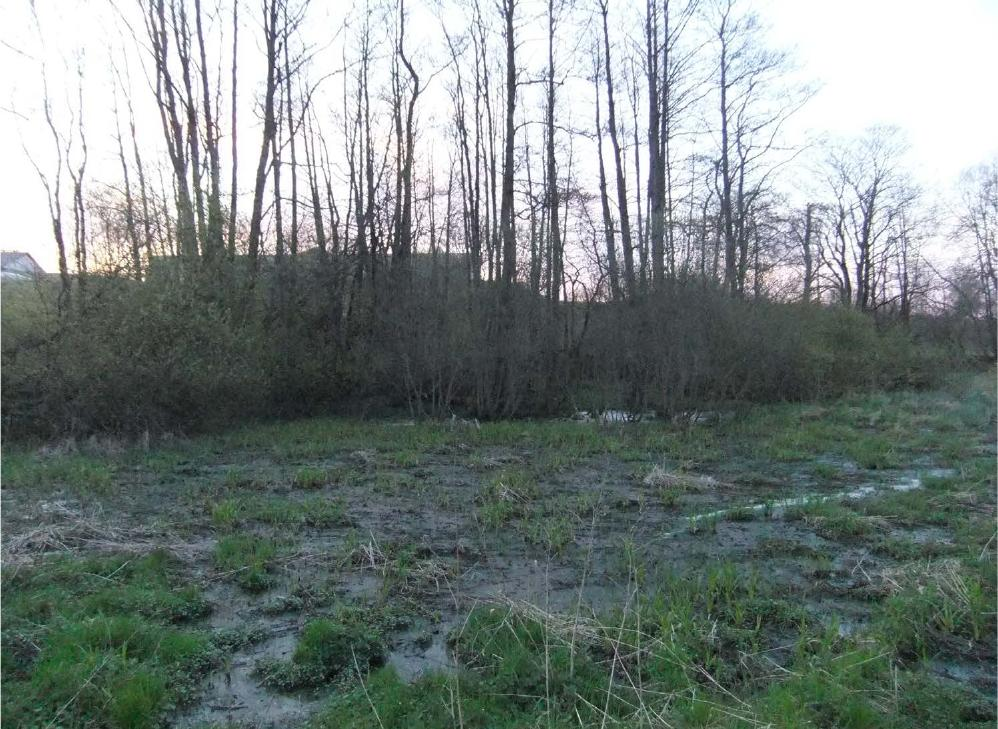 Miljökontorets bilder visar hur flytgödseln från den läckande gödsellagunen spred sig i naturen.