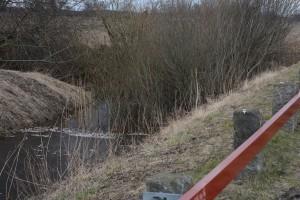 De döda fiskarna låg väl synliga från vägen, vid bron över Tormestorpsån, längs vägen till Hovdala slott.