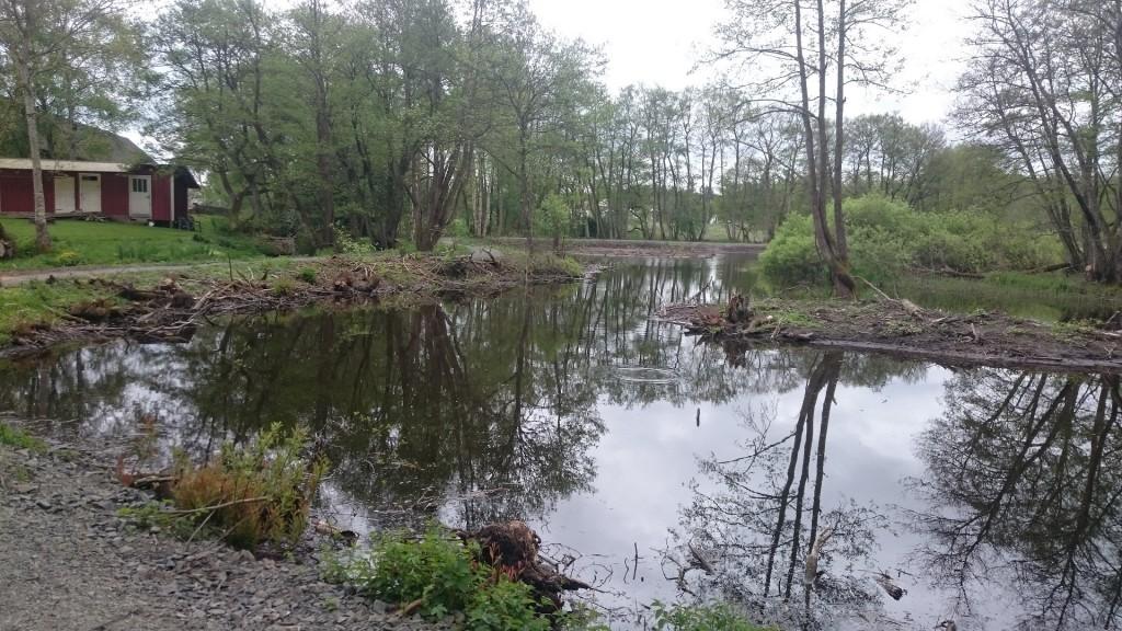 Ljungamölla våtmark i Vinslöv har restaurerats och invigs imorgon. Foto: Lars-Erik Williams