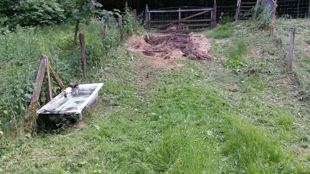 Samma dag som länsstyrelsen inspekterade fårhagen städade kommunen upp. Vattenkaret rengjordes, det gamla höet togs bort och nässlor slogs.