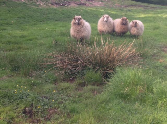 Efter en anmälan om vanvård av fåren på Galgbacken har kommunen tvingats vidta en rad åtgärder.