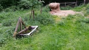 Gammalt och mögligt hö fanns kvar sedan i vintras.