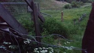 De höga nässlorna vid ingången tydde, enligt anmälaren, inte på att någon varit här för att se till fåren på länge.