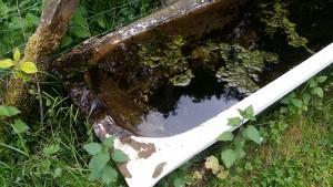 Vattnet var smutsigt och fyllt av alger när länsstyrelsen kom på inspektion.