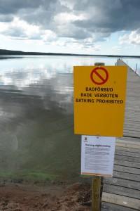 Skylten om badförbud kom upp först tre veckor efter att algblomningarna börjat. De har dock varierat i omfattning. Foto: Berit Önell