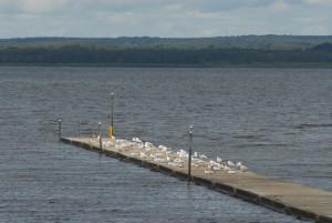 Kan det vara fåglarna som förorenat vattnet? Det misstänker miljöchef Sven-Inge Svensson, men vidare diskussion om orsak och eventuella åtgärder får vänta tills omprovet är analyserat. Foto: Urban Önell