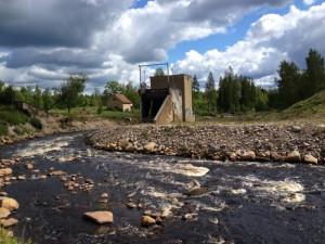 Det stora dammraset i Hästberga har skapat en intressant biologisk mångfald. Foto: Lukas Österling, Länsstyrelsen Skåne