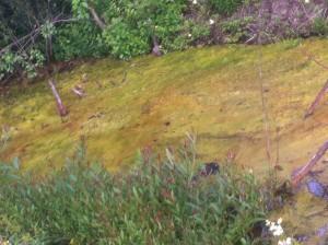 Miljönämnden kräver nu att tekniska förvaltningen utreder orsaken till föroreningarna i Sötekärrsbäcken. Bilden är tagen på fredagen.