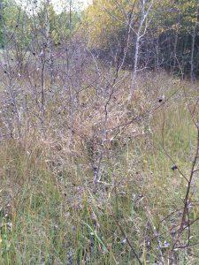 Där det idag är en stig på norra sidan om Sötekärrsbäcken låg grustäkten som blev en deponi.