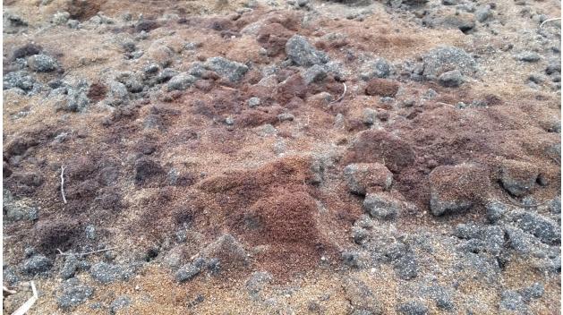 Det kan bli förbud att odla på åkern som är full av avfall, bland annat gammal asfalt. Foto: Daniel Rasmusson/Miljökontoret