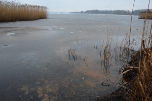 Fluffiga svampar har intagit stora delar av Finjasjön vid Sjörröd och syntes även genom isen innan snön lade sig.