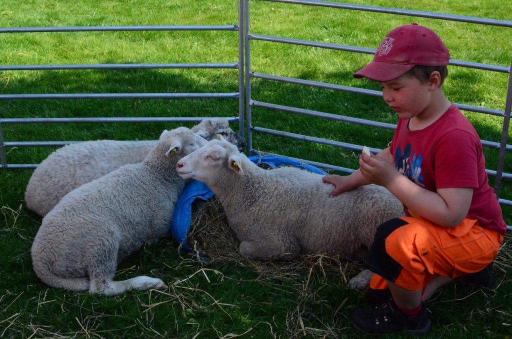 Lammen blev populära hos de yngsta.