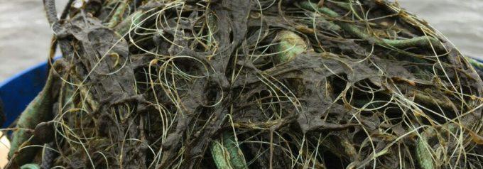 Smutsvattensvamp och alger sätter igen fiskenäten i Finjasjön