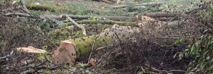 Naturen som kommunekologen ville bevara kalhöggs när kommunen sålt den
