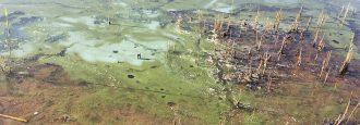 Giftig svavelvätegas kan ha dödat fisken vid Björkviken