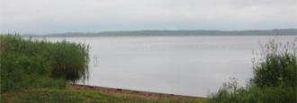 Rekordmånga fåglar i Finjasjön – men inte vid Sjörröd