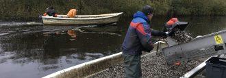 Livsmedelsverket har inte riskbedömt Finjasjöfisken Skärpta riktvärden för PFAS på gång