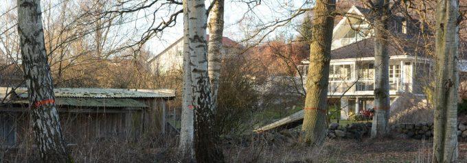 Bättre sjöutsikt när kommunen fäller träd i Sjörröd