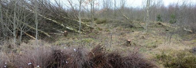 Risföretagare dömd för stöld av mossa på Hovdala