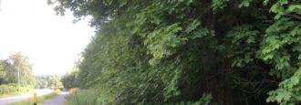 Kommunens skogsbruk hotar naturvärden och skyddszon