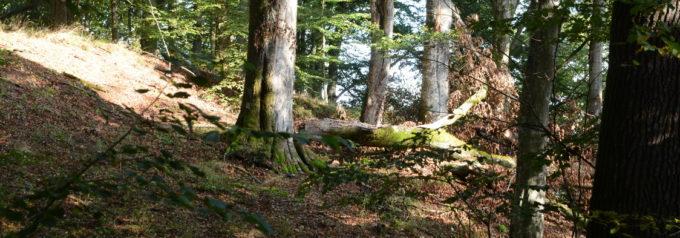 Hovdala kan bli naturreservat – med endurokörning