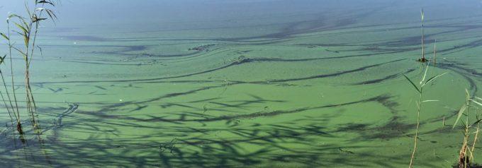 Konsulter backar om reningsverkets påverkan på sjön