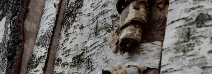 Delar av vindskyddens björkfasad utbytt