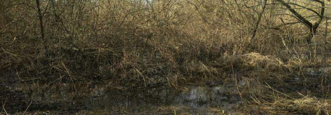 Hittade ingen utterlya vid Finjasjön